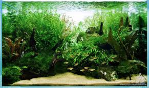 Aquarium Aquascapes Planted Aquarium Tank Portal Planted Tank Gallery Project Aquarium