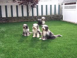 Dog Backyard Playground by Pet Turf Artificial Grass For Dogs San Jose California