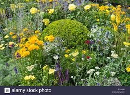 Flower Topiary Colourful Planting Of Yellow And Blue Perennials With Topiary