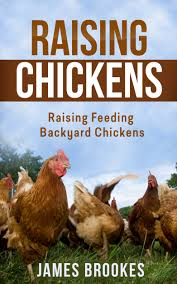 cheap feeding chickens meat find feeding chickens meat deals on