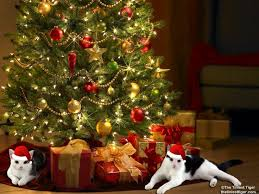 391 best cats u0027n christmas trees images on pinterest