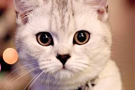 in cats symptoms causes diagnosis treatment recovery