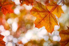 21 mind blowing facts about autumn reader u0027s digest