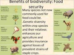 biodiversity biodiversity biodiversity biodiversity biodiversity