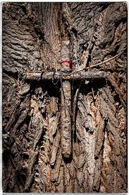 pixadilly by george brown archive tree cross at chimayo