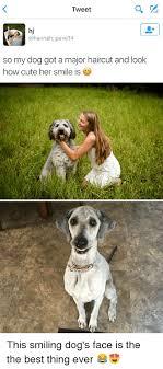 Best Dog Memes - ever green dog memes 27 wishmeme