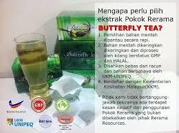 Teh Rerama teh rerama butterfly tea khasiat teh rerama butterfly tea