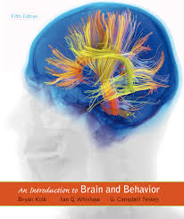 Introduction An Introduction To Brain And Behavior 9781464106019 Macmillan