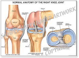 Knee Anatomy Pics Knee Injury