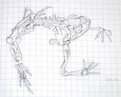 frog skeleton sketch cropped research sketch for some proj u2026 flickr