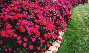sunny perennial garden ideas landscaping gardening ideas