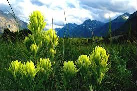 flowers canada flowers in canadian national parks waterton alberta