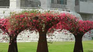 beautiful small trees for garden from small town garden with