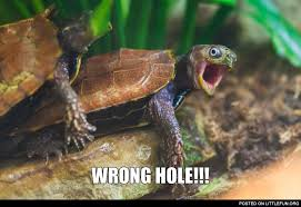 Turtle Meme - littlefun wrong hole turtle