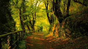 Best Place To Buy Home Decor Great Autumn Forest Pathway View Wallpaper X Idolza