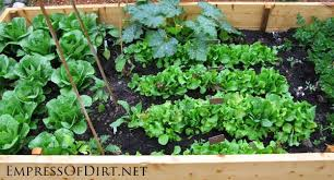 Home Vegetable Garden Ideas 20 Ideas For Your Home Veggie Garden Empress Of Dirt