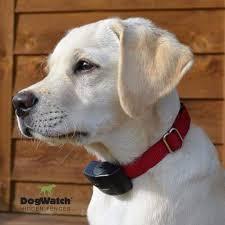 photo gallery dogwatch of central florida wintergarden fl