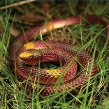 halloween snake prop ebay