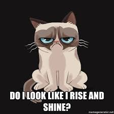 Meme Generator Grumpy Cat - cartoon grumpy cat meme generator grumpy best of the funny meme