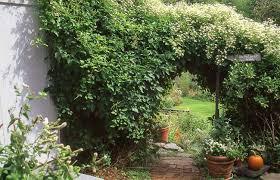 climbing vine plants u2013 savingourboys info