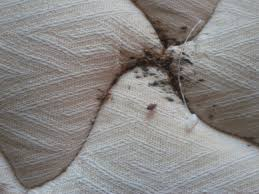 How To Get Rid Of Bed Bugs At Home Answering Some Common Questions About Bed Bugs Dsr Pest