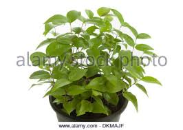 small green tree in a pot with green background stock photo