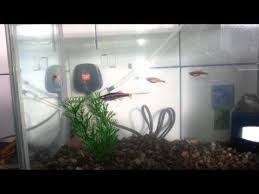 monty python fish morning k pop lyrics song