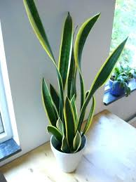 house plants low light very low light houseplants houseplant low light pertaining to best
