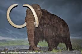 elephants furry u2014bedtime math u2014daily math