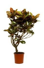 67 best office plants images on pinterest office plants office