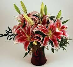 stargazer lilies s stargazer lilies kremp