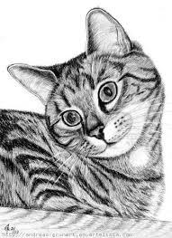 imagenes a lapiz de gatos gato cat grunert andreas artelista com