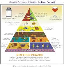 the new food pyramid