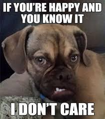 Frowning Dog Meme - simple 20 frowning dog meme testing testing