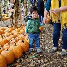clancy u0027s christmas trees u0026 pumpkin patch 92 photos u0026 87 reviews