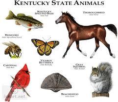 Kentucky wildlife images 38 best kentucky wildlife images kentucky wildlife jpg