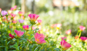 heat loving plants heat loving plants that can withstand a texas scorcher