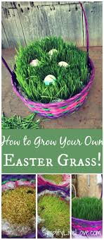 bulk easter grass how to grow your own easter basket grass simplify live