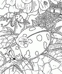 beetles in spring coloring page for kids seasons coloring pages