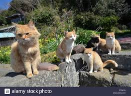 tuesday 22nd mar 2016 an army of cats inhabit the cat paradise