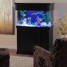 Wall Aquarium by Clear For Life Rectangle Aquarium Hayneedle