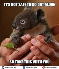 baby koala memes different types of funny animal memes