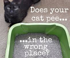 how to clean cat urine stains and get rid of the odor dengarden