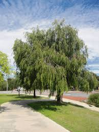city of joondalup to plant more trees leafy city program