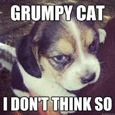 Grumpy Dog Meme - grumpy cat i don t think so grumpy dog quickmeme