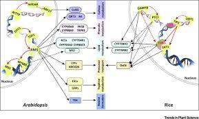 Pollen Map Genetic And Biochemical Mechanisms Of Pollen Wall Development