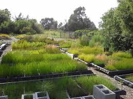 native wetland plants greenhouse and nursery ccber