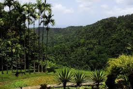 bureau valley martinique empress josephine s humble beginnings on martinique travel