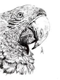 8 best soft sketches images on pinterest sketching parrots and