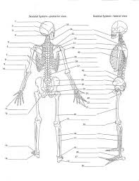 College Anatomy And Physiology Notes Skeletal System Anatomy And Physiology Skeletal System Test With